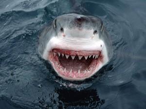 V minulém roce padl rekord v počtu zaznamenaných útoků žraloků na člověka, byla jich skoro stovka.