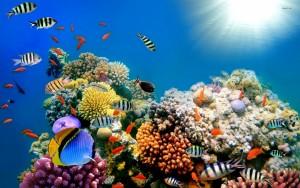 Celá pětina druhů všech mořských živočichů žije právě na korálových útesech. I přes ohromné množství života, který obsahují, zabírají korálové útesy pouhou setinu rozlohy moří.