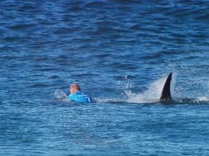 Jedním z napadených byl i surfař Mick Fanning. Záběry žraloka pronásledujícího sportovce u jihoafrického pobřeží obletěly svět.