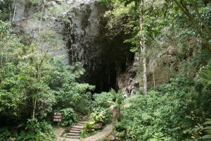 Největší lovy na mláďata gvačarů byly pořádány v jeskyni Cueva del Guacharo, která je dnes součástí stejnojmenného národního parku.