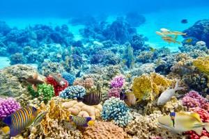 Koráli dokáží růst rychlostí 20 milimetrů za rok, potřebují však k tomu ideální podmínky. K zotavení potřebují korálové kolonie dostatek času.
