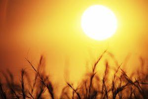 Metabolismus pravěkých lidí neuměl získávat životně důležitý vitamin D z mléka, a proto záleželo na tom, aby jeho pokožka dokázala absorbovat co nejvíce slunečních paprsků, které jej v těle dokáží produkovat.