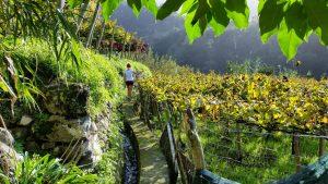Na Madeiře se pěstují převážně exotická dezertní vína unikátní svou chutí a výjimečnou kvalitou.