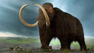 V době ledové mamuti obývali severní, střední i západní Evropu a vyskytovali se i v Severní Americe a Asii.