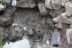 Archeologům se podařilo najít téměř kompletní kostru. Na obrázku je její část.