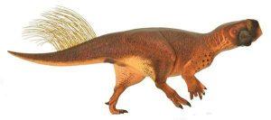 Dinosaurus měl velkou hranatou hlavu. Ze stran lebky horizontálně vyrůstaly dva rohy.