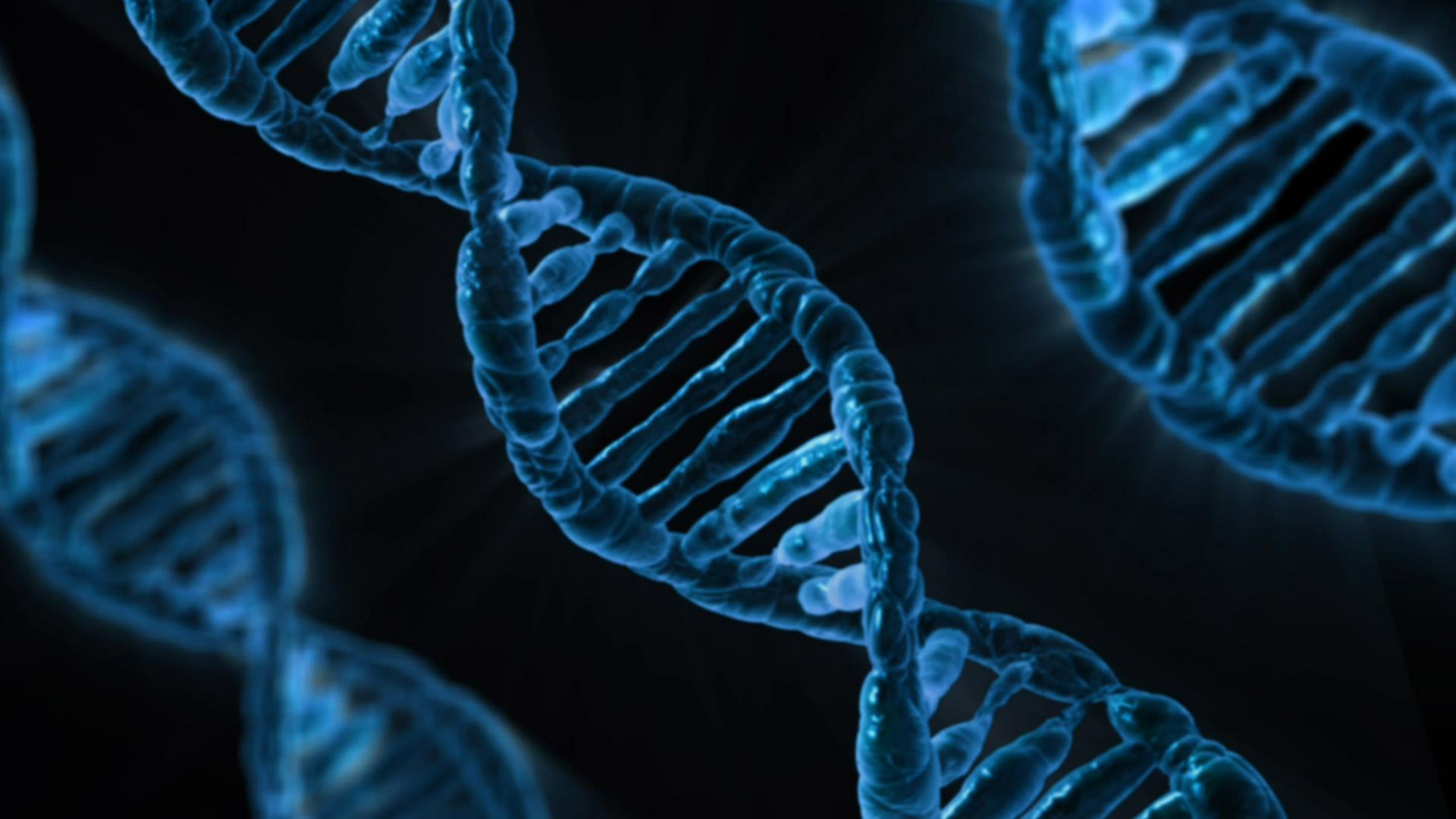 Obr. 2 – DNA