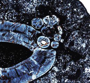 Nahoře histologický řez čelisti gorgonopsida, který ukazuje shluk nezhoubných nádorů.