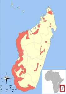 Mapa Madagaskaru ukazuje rozšíření drobných nočních lemurů z rodu maki.