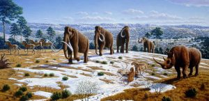 V době posledního glaciálu vyhynulo velké množství druhů, zejména tzv. megafauny.