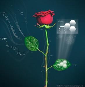 Elektronická růže může mít vodiče prorůstající stonkem a elektrochemické články v listech.
