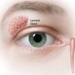 Slzy se tvoří v slzní žláze, z oka jsou pak odváděny slznými kanálky a nosním slzovodem.