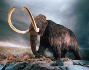 Nejznámější obětí vymírání pleistocenní megafauny byl bezesporu mamut.