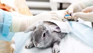 Experimenty na zvířatech jsou pro testování nových léků nezbytné.