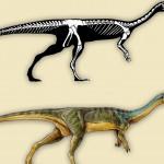 Malá hlava Chilesaura a jeho štíhlý krk také podporují teorii, že se živil jako býložravec.