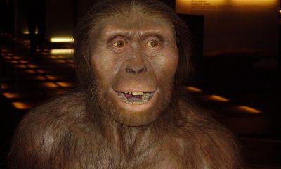 Pravděpodobná podoba samice Australopitéka