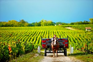 Pohled na vinice Bordeaux vás rychle přenese do starých časů.