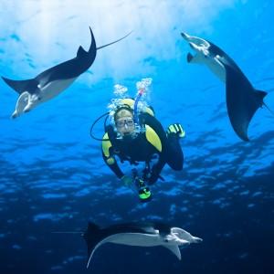HAWAI: Noční potápění s mantami v Kailua Kona