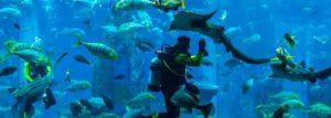Nejúchvatnější akvária na světě