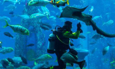 Slider akvárium