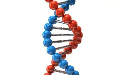 Tělesný vzrůst je omezen genetickou výbavou, která má nastavenu maximální tělesnou výšku na zhruba 240 cm.