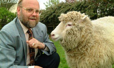 Ovce Dolly přivedla za svůj život na svět šest zdravých jehňat. Sama ale zemřela předčasně na plicní infekci.