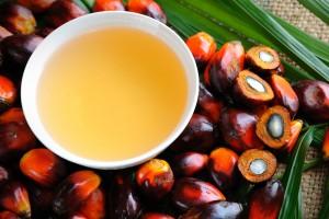 Jen v Indonésii zabírají háje palmy olejné 6 milionů hektarů, to je přibližně třikrát víc než rozloha veškerých lesů v České republice.