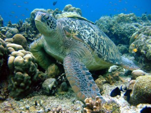 MIKRONÉSIE: Ostrovy Palau a stěna Blue Corner
