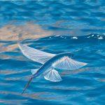 Jak se létá bez křídel? 3 vzduchoplavci, kteří nepatří mezi ptáky ani hmyz