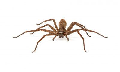 Ačkoli jsou pavouci relativně užiteční, málokdo touží mít je doma.