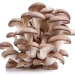 Tak trochu jiné houby…