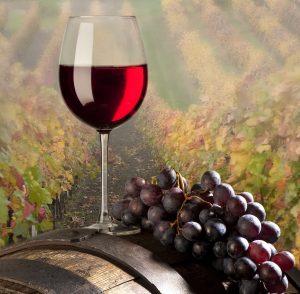 I víno patří k dovolené