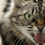 5 faktů o kočkách, o kterých jste neměli ani tušení
