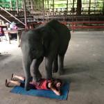 Bolest zad vám vyléčí zašlápnutí slonem