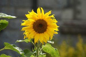 Rostliny jsou při svém růstu ovlivňovány mnoha vnějšími faktory. Jedním z nich je právě světlo.